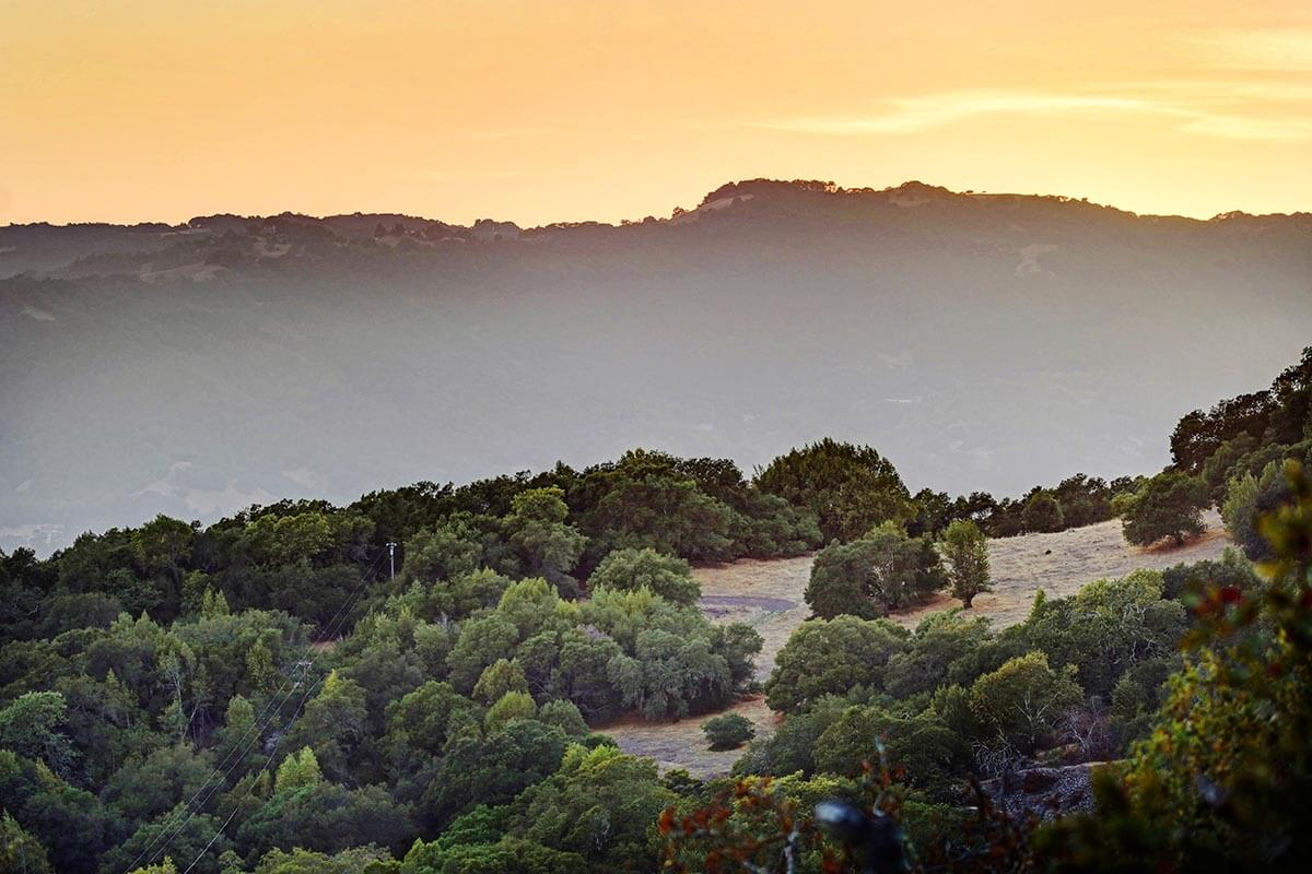 Sonoma Valley hillside